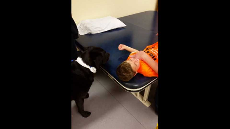 VIDEO Sixyearold Boy Feeds Dog Treats As Therapy After Brain - One boy dog heart warming