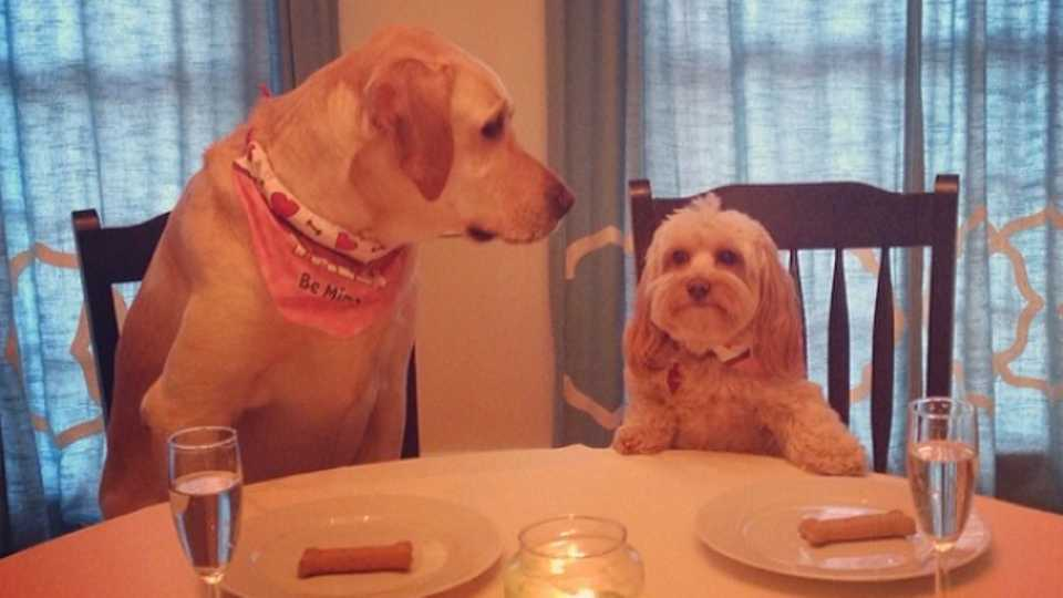 photos could the relationship between these two dogs be