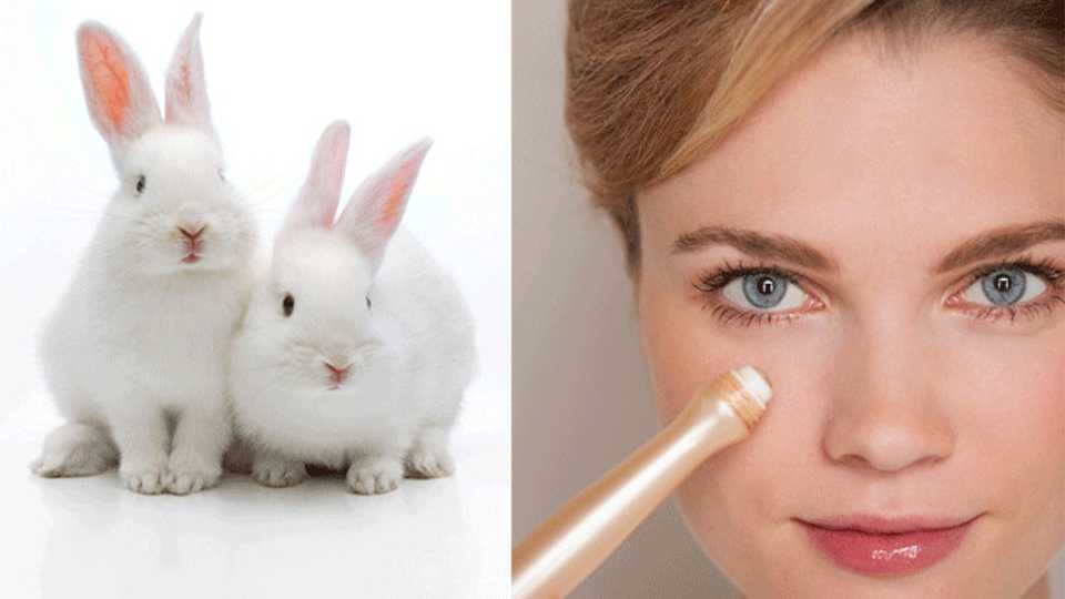 animal testing cosmetics testing A complete ban on the sale of cosmetics developed through animal testing is  now in force in the eu.