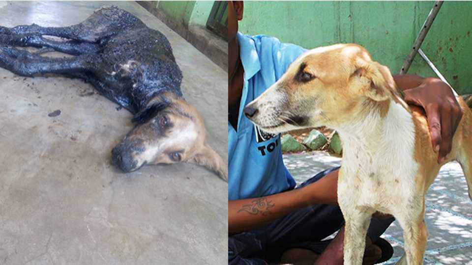 Street Dog On The Brink Of Death Is Rescued After Getting Stuck In
